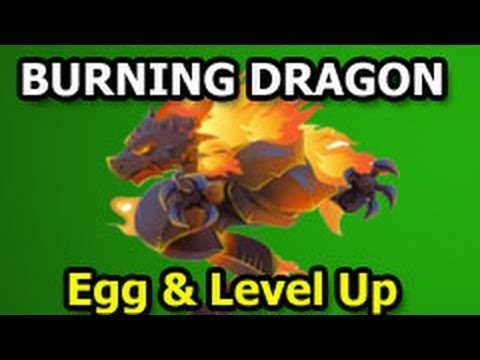 BURNING DRAGON Dragon City Black Market Egg and Level Up Fast Review