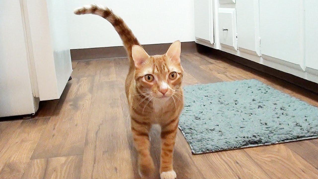 Comment les chats disent qu'ils vous aiment ?