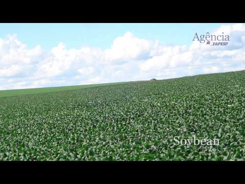 Climate impacts on agriculture: Implications for crop production