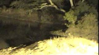Leopard at Djuma Waterhole - Oct 12, 2011