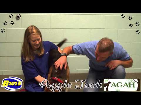 Pet Corner - Apple Jack