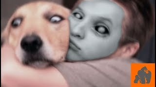 Funny Dogs Scared of Masks - Part 1