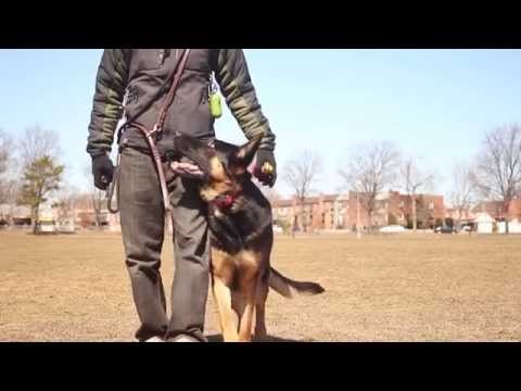 Gear Keeper from Ecollar Technologies Review - Why you need one! Dog Training Gear
