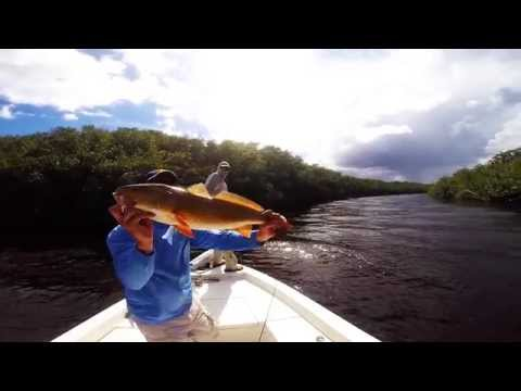 Flamingo Fishing catching Snook, Redfish, Goliath Grouper, snapper and sharks.