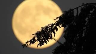 Nikon P900 on rising moon  2015-07-01. 2000 mm + optical zoom. world record © Lothar Lenz