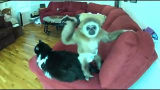 Funny Monkey and the Cat
