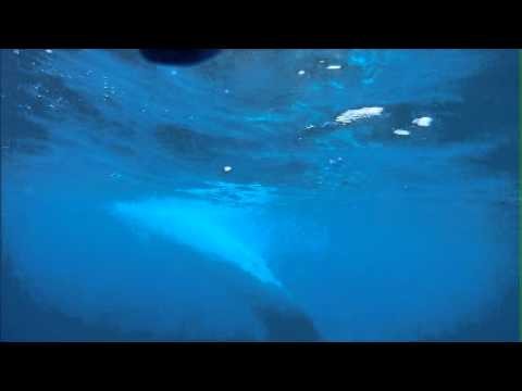 Blue Whale Video Shot with GoPro - Dana Wharf Whale Watching - Dana Point, CA