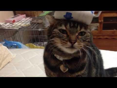 Прущийся кошак. Домашние животные в Японии
