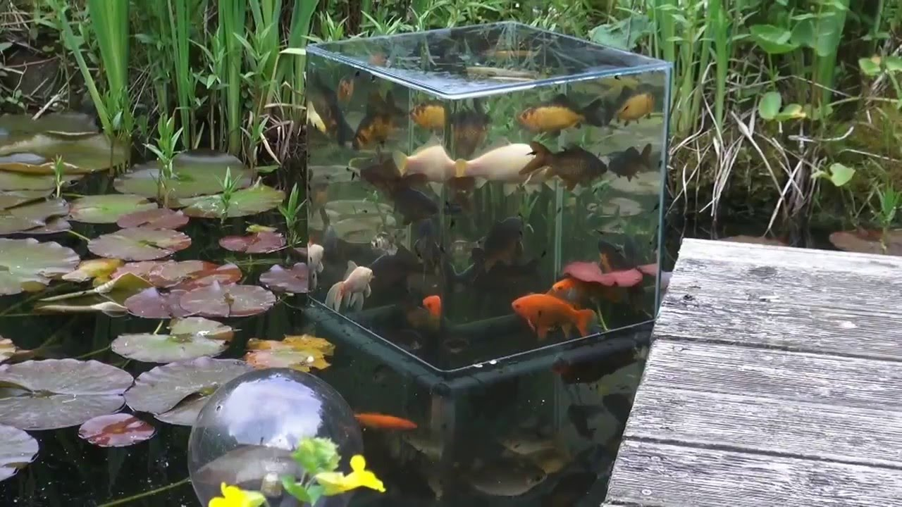 [The Coolest Aquarium You'll See Today] Video