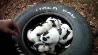 Mother and 9 puppies at dead end street. Macon bibb Animal welfare