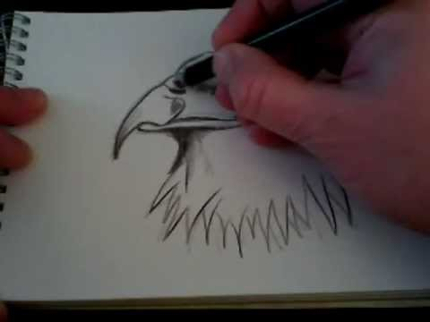 How to Draw a Hawk Head Step by Step How to Draw an Eagles Head