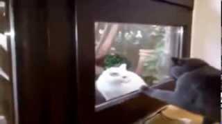 Clip hài hước động vật 1 - Insolink Việt Nam