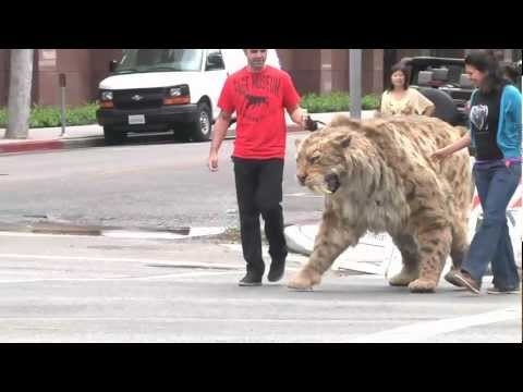 Saber-toothed cat struts down Wilshire Blvd in L.A. and comes home to the Tar Pits!