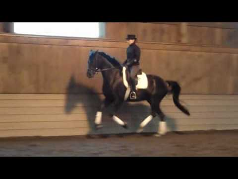 Dressage Horse for Sale 5 year Hanoverian,G,