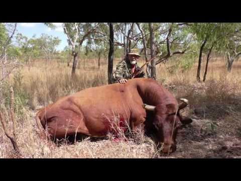 Australian Scrub Bull Traditional Bow Hunt