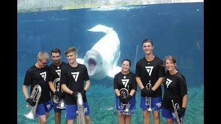7th Regiment Small Brass Ensemble Performs For Beluga Whale