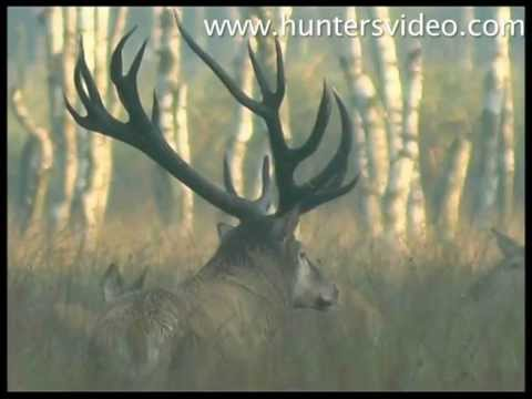 monster-stags-hunters-video.html