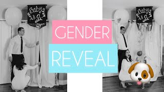 Baby Ciciotti Gender Reveal ft. Dogs!