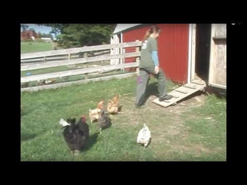 Reel Life at Farm Sanctuary – Ep. 2: Chicken Nutrition