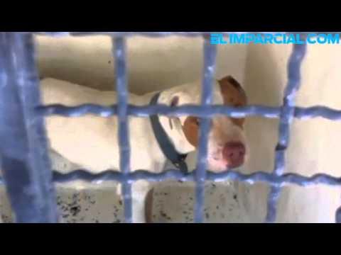 Propone esterilizar mascotas