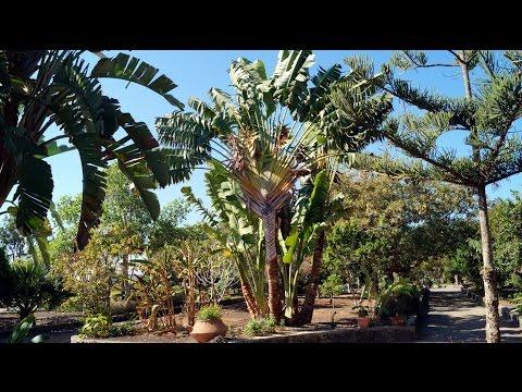 Botanical Park of Maspalomas. Gran Canaria.
