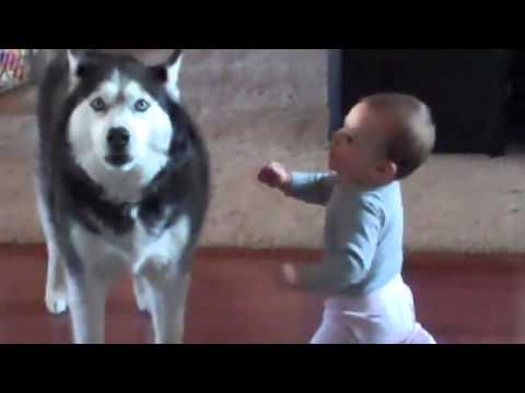 Husky Communicates With Baby   cute!