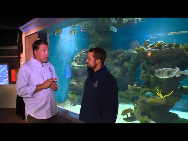 Greater Cleveland Aquarium on Blue Zoo TV pres by Hikari feat. Fluval