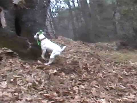 Busy Bee Dogs - The Leprechaun Dog!