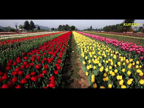 Srinagar, Kashmir, India: Tulip Gardens in Bloom | EXPLORE, NATURE