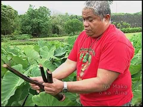 Malama Haloa - Protecting the Taro (TRAILER)