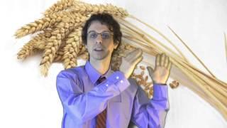 Cereali Glutine E La Scienza Al Rovescio