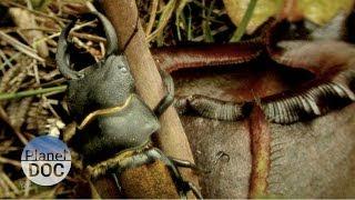 Plantas Carnívoras | Naturaleza - Planet Doc