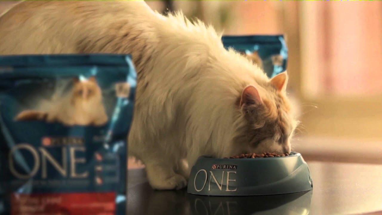 Purina one alimentaci n espec fica para gatos - Alimento para gatos esterilizados ...