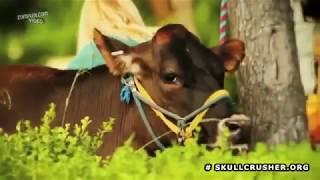 Kate Upton'ın Çiftlik Macerası!