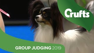 Toy Group Judging and Presentation | Crufts 2019