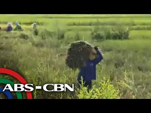 TV Patrol: 'Mga magsasaka sapul sa pag-angkat ng bigas' thumbnail