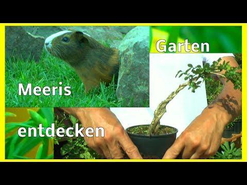 Der Garten im Wandel der Zeit Pflanzen Meeris und mehr entdecken im kleinen Garten