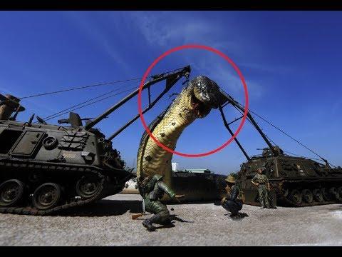#Hindi दुनिया का सबसे बड़ा सांप || Biggest Snake in the world ( World's largest Snake found )