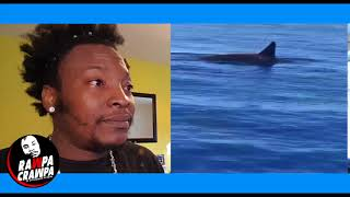 Killer Whales spotted On Holiday In Montego Bay Jamaican ( 12 June 2018 ) Rawpa Crawpa Vlog