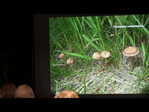 Paul Kroeger - The History of Psilocybin Containing Magic Mushrooms
