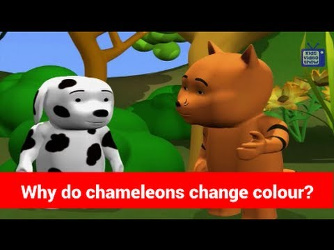 Chameleon Changing Color Animated do Chameleons Change Color