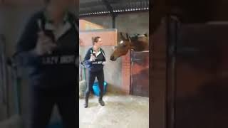 Khoảnh khắc đáng yêu của chú ngựa-Video dỗ trẻ ăn