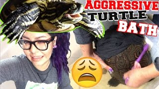 AGGRESSIVE TURTLE BATH TIME! (how to clean a turtles shell)