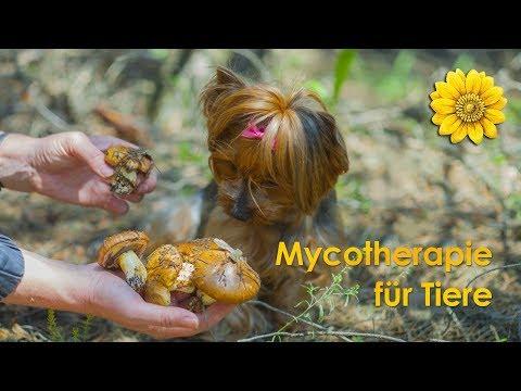 """Online-Vortrag """"Heilpilze für Tiere"""" mit Nils Steenbuck"""
