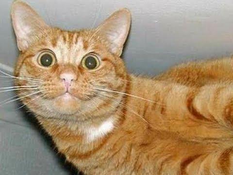 Super Kocak - Kucing Suka Pantat