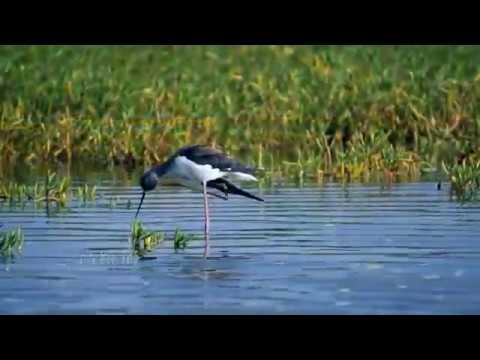南海指環 東沙的昆蟲與鳥類