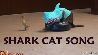 SHARK CAT SONG. What Does the #SharkCat Say? | Texas Girly 1979
