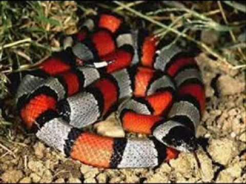 Top 10 Las serpientes más hermosas del mundo