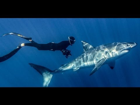 Great White Shark IMAX and Digital 3D Official Trailer