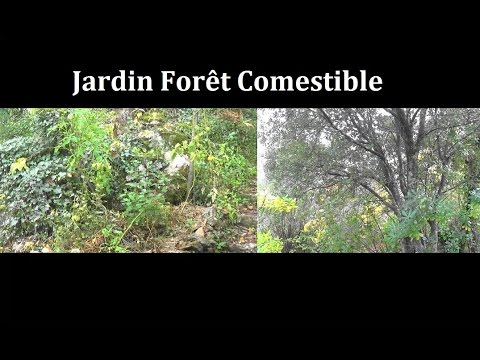Le jardin for t comestible permaculture agro cologie etc for Jardin foret